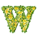 letter initial W spring colorful blooming with vivid green leaves yellow flowers ultra realistic